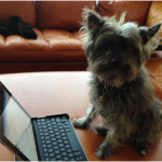 David's dog, Bella, questions a revenue model